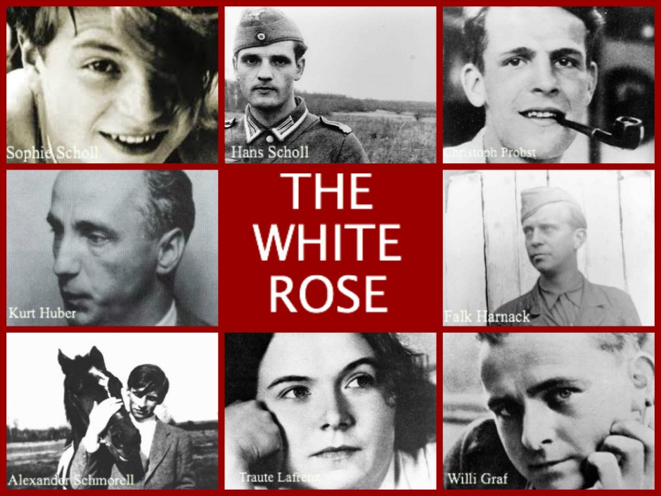 the-white-rose-all